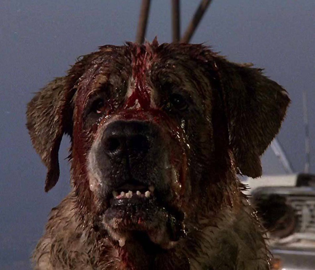 "MOVIE Cujo AMC, 10 p.m. ET; 7 p.m. PT Described by Stephen King as a ""big, dumb slugger of a movie,"" this thriller scared the wits out of moviegoers back in 1983. Taking considerable liberties from King's original novel, the film stars Dee Wallace as Donna, a frustrated Maine housewife who brings her young son along when she takes her ailing car to a mechanic living on a nearby farm. Bad move, as it turns out, since the mechanic's Saint Bernard, named Cujo, has been infected by a rabid bat and has become a massive, slobbering killing machine. Note: The movie has a happier ending than the book, but it's still pretty unpleasant."
