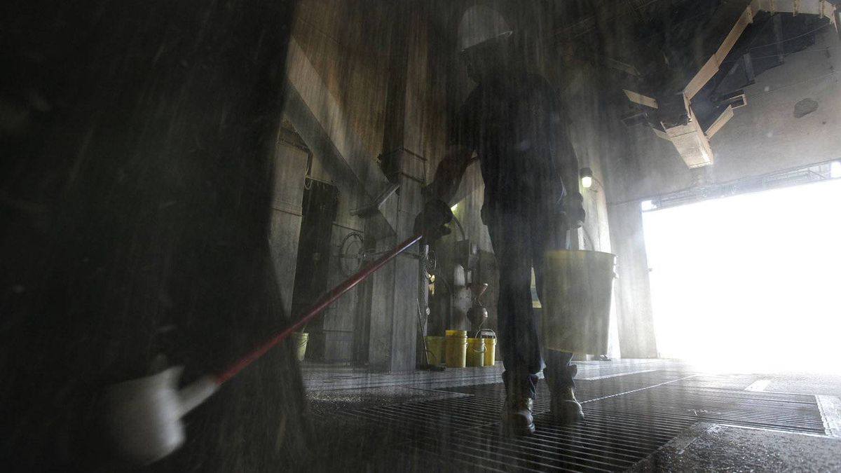 Richard Martens, an elevator assistant, catches a sample of canola at the Paterson GlobalFoods Incorporated grain elevator in Winnipeg.