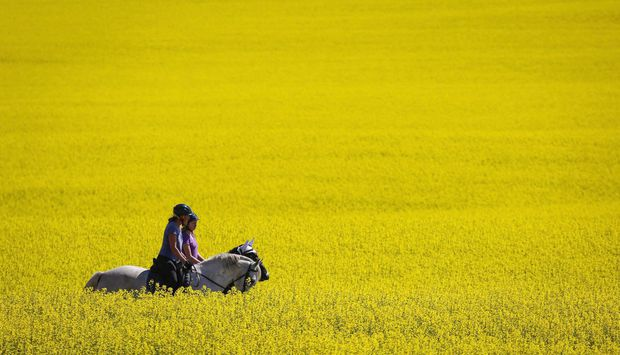 Agriculture, trade ministers will testify in April on Chinese canola issue