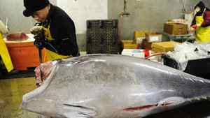 A worker cuts a bluefin tuna into pieces in order to provide it to New York's top sushi restaurants at a fish market in Jersey City, New Jersey, March 12, 2010.