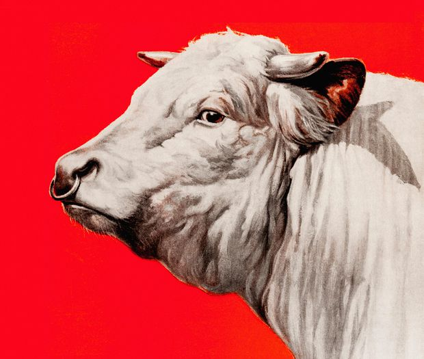 with veganism on the rise is meat cooked the globe and mail