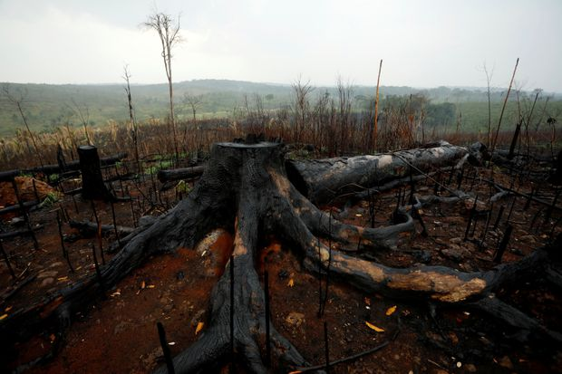 Why there is climate hope, despite the Amazon tragedy