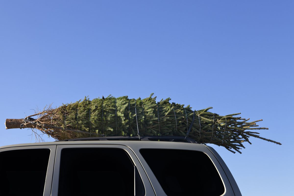 Buying a Christmas tree? Make sure you can transport it safely - The Globe and Mail