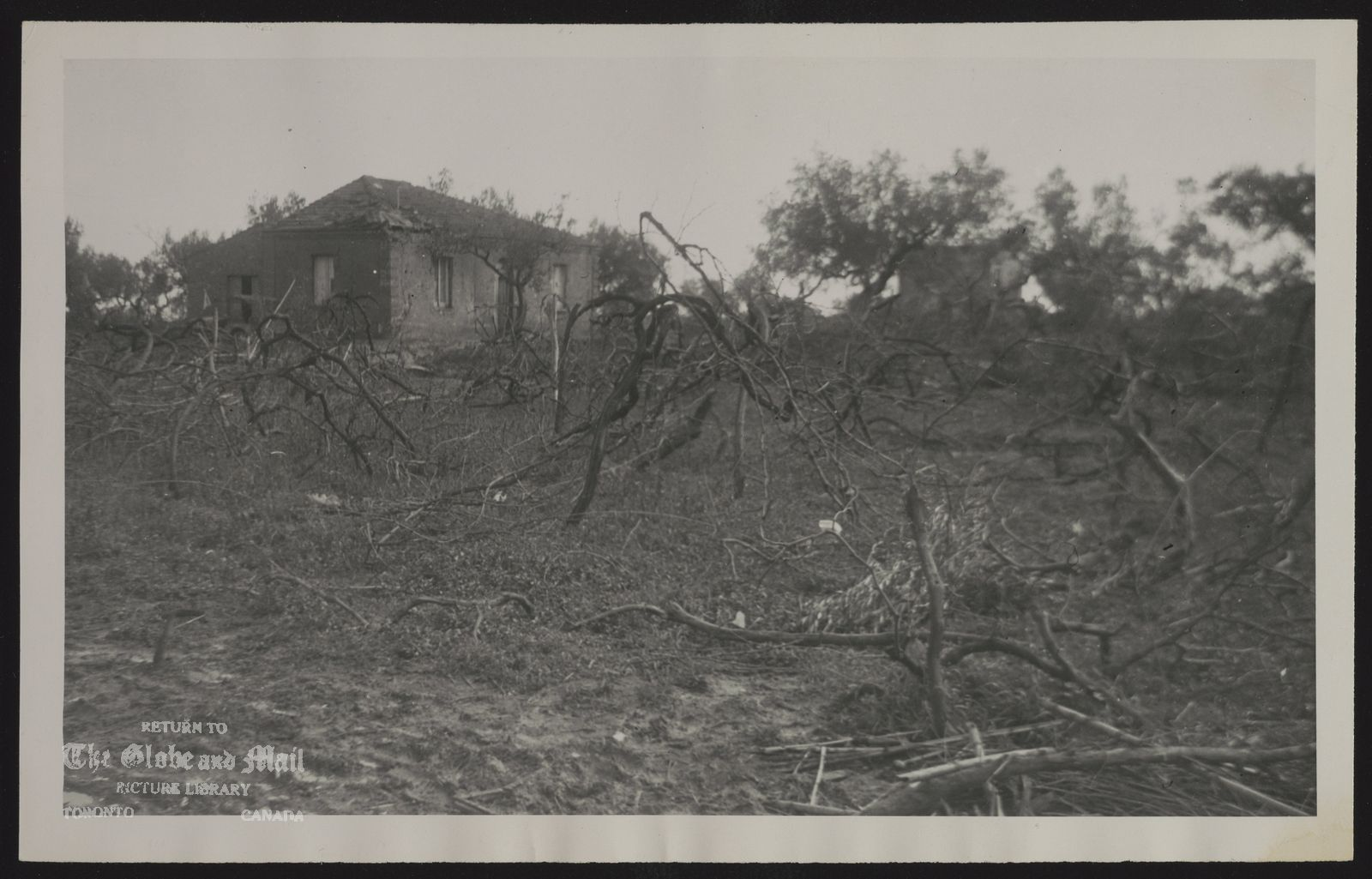 WORLD WAR II Canadian Forces This photo shows the tangled vineyards which concealed the one-storey farmhouses that shielded the enemy troops and permitted small protection on the advancing Canucks. Heavy casualties were imposed upon Canadian soldiers at this very spot near Ortona. Photo by V.G. Lewington, 1943