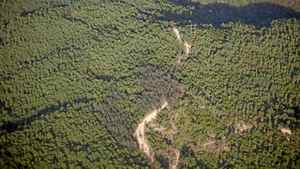An aerial view of Yunnan forest plantations near Lincang, Yunnan Province, China on June 10, 2011.