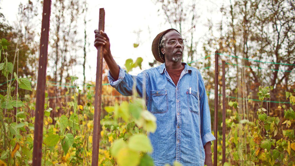 Anan Lololi, the Executive Director of Afri-Can Food Basket walks through their Toronto farm on October 13, 2011