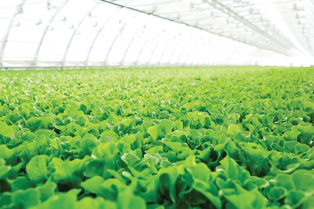 Expanded greenhouse production and indoor growing will increase the availability and quality of fruit and vegetables.