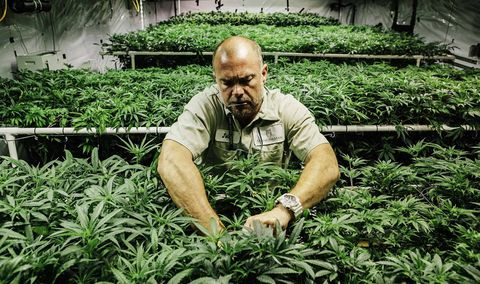 Deep in the weeds: How Colorado is dealing with legalized marijuana