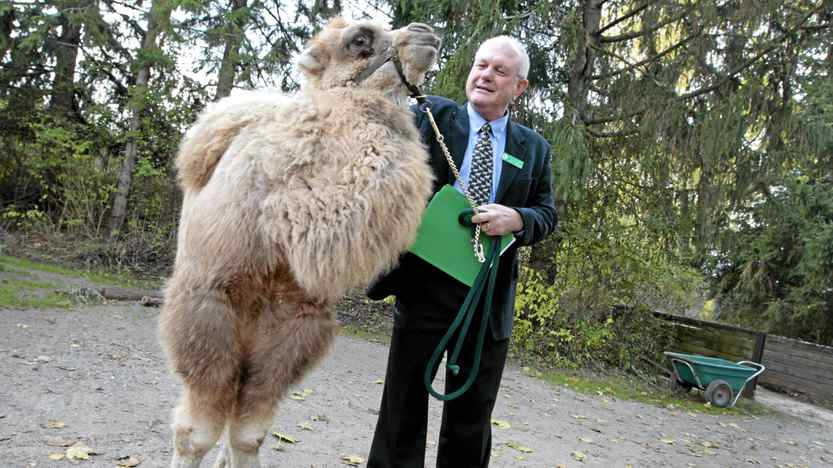 Kumar, a three-month-old Bactrian camel, with Dr. Bill Rapley at the Toronto Zoo