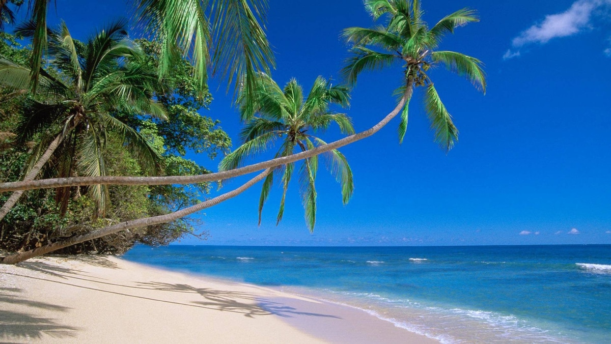 Kadavus is the fourth largest island in Fiji. Rainforest covers much of the land, extending right to the beaches.