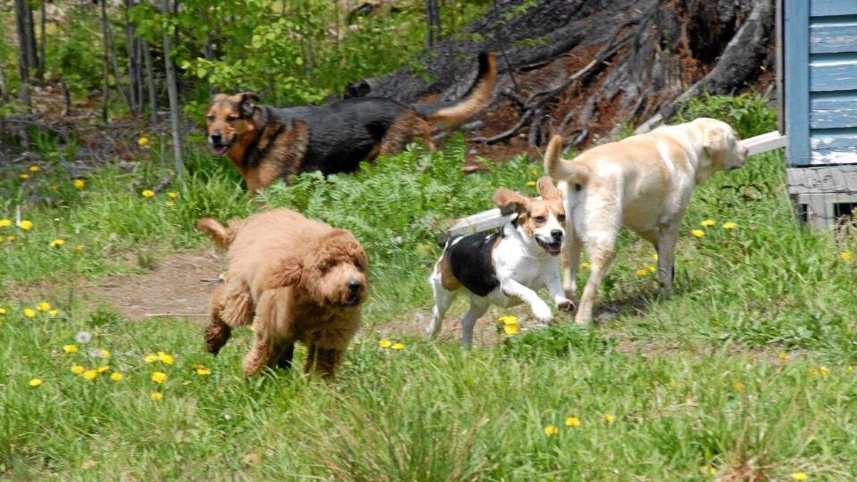 Happy Tails: Muskoka's retreat for the furry elite