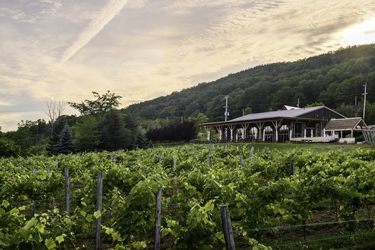 Visiting wine country for harvest? Bring a sense of adventure, an appetite and a mask