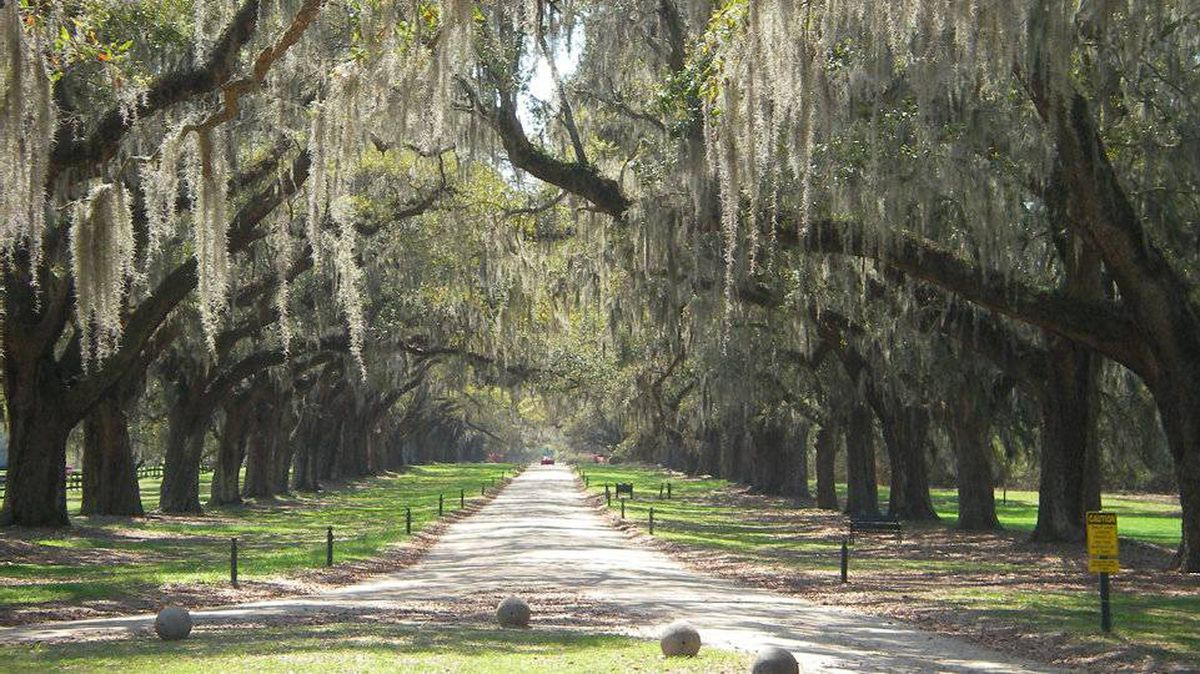 From Stacy Beers-Thain, Summerside, Prince Edward Island: Boone Hall Plantation, South Carolina