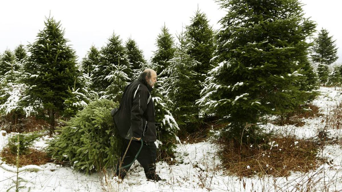 Where Canada's Christmas Trees Come From