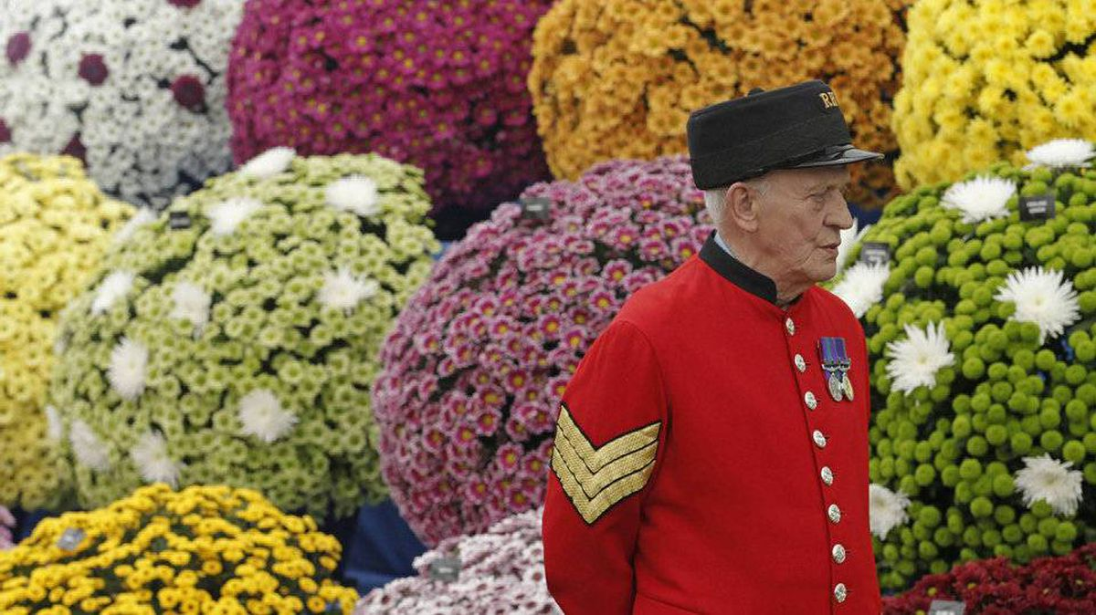 A Chelsea Pensioner stands in front of chrysanthemums at the National Chrysanthemum Society stand, during media day at the Chelsea Flower Show 2011, London May 23, 2011.