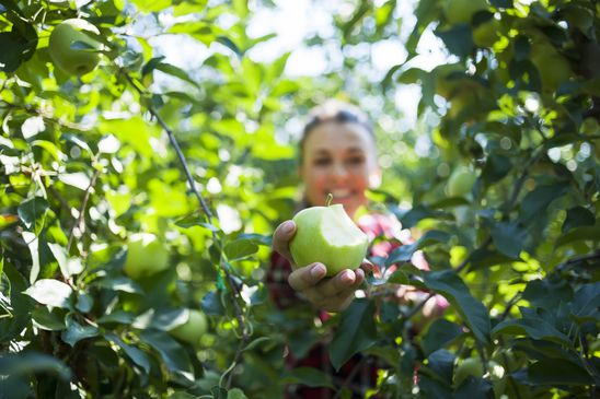 Pilfering fruit in late summer is not such a bad thing if it's on public property