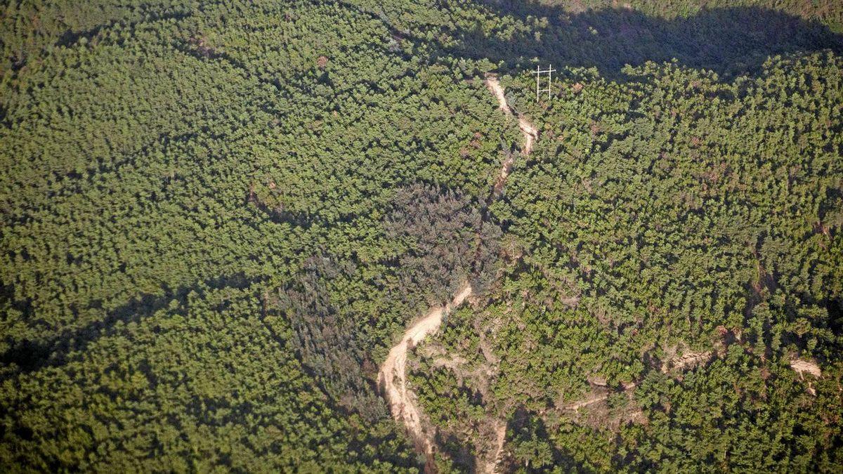 An aerial view of Yunnan forest plantations near Lincang, Yunnan Province, China on June 10, 2011.