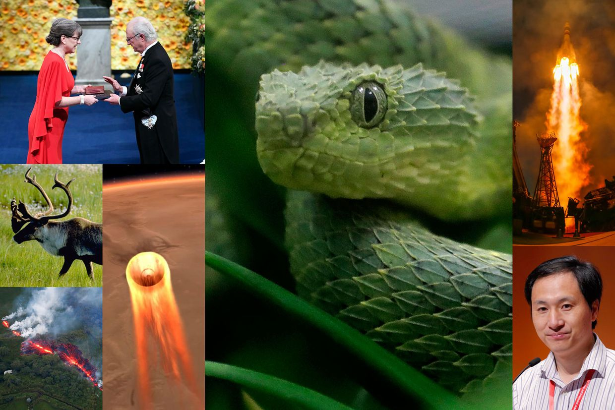 Great snakes! The Globe's 2018 science quiz is a feast for the mind