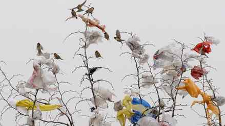 Birds share a perch with a flock of plastic bags in Changxi, China.