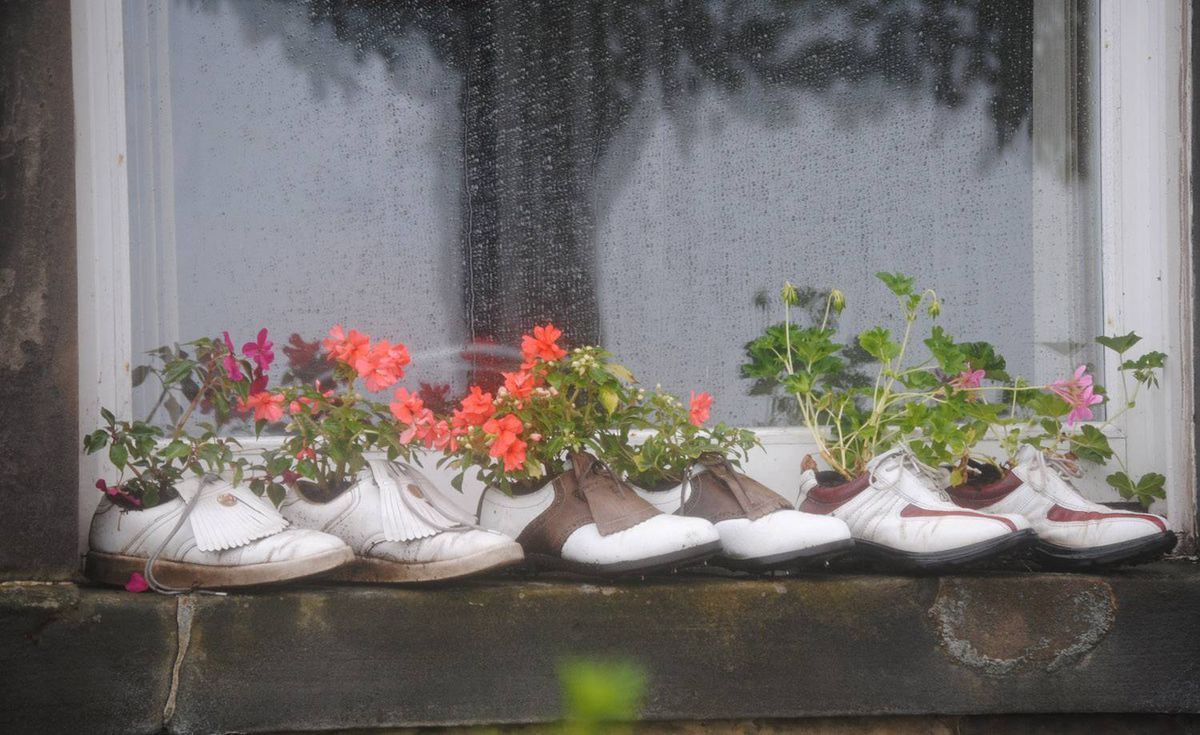 An interesting use for used golf shoes