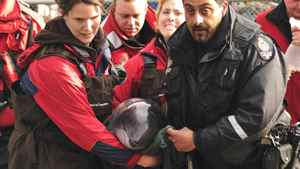 Vancouver Aquarium employees carry a porpoise named Siyay that was stranded off Saltspring Island and rescued by a hovercraft, in Vancouver, Tuesday, April 26, 2011.