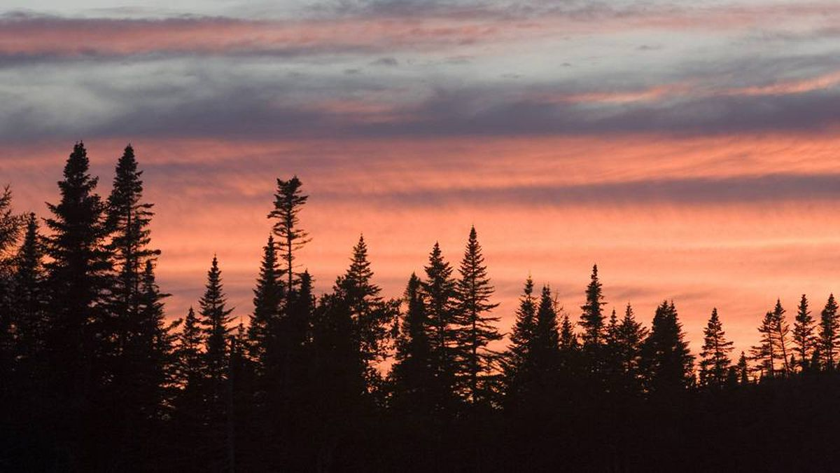 Trees are silhouetted as the sun sets behind them in Gros Morne National Park.