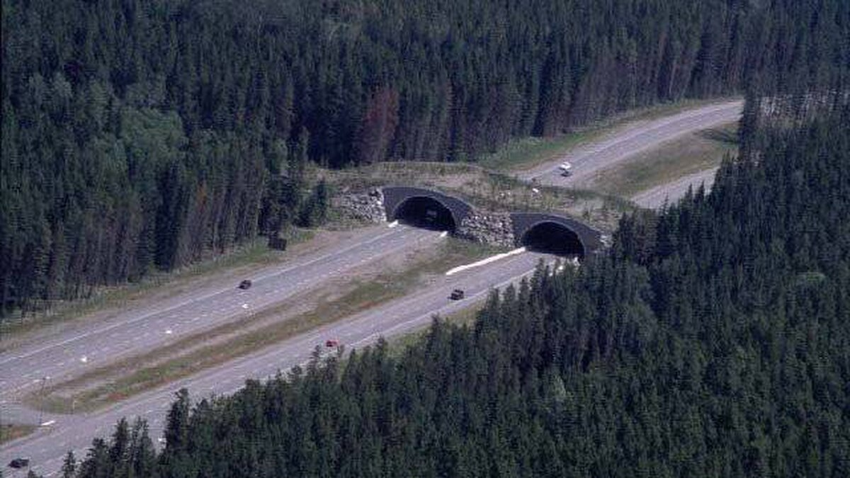 The Redearth wildlife overpass, over the Trans-Canada Highway, in Banff National Park.