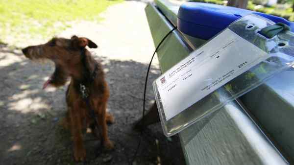 Riley, an Irish terrier with his licence his owner must carry in a dog park in Westmount, a suburb of Montreal, June 14, 2011.
