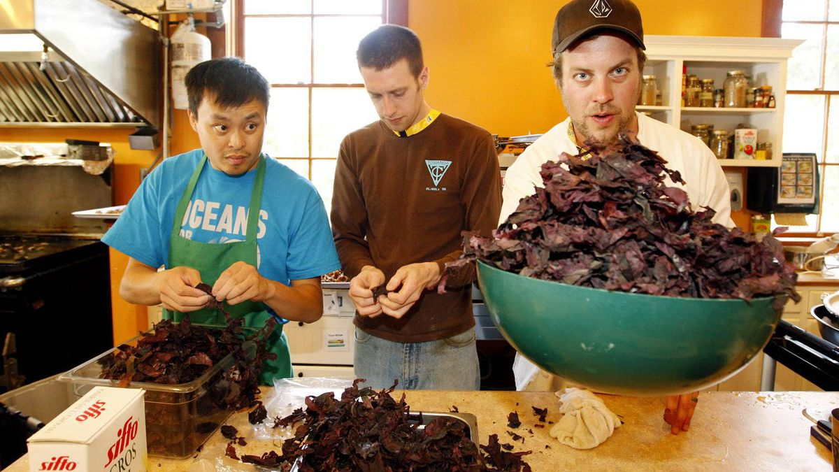 From left: Quoc Phi and Cliff Morrison help Saint John Ale House Executive Chef Jesse Vergen (right) prepare IMTA kelp.