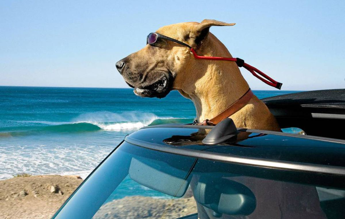 Marmaduke moves to California with his ?fam?: Think The O.C., but for canines.