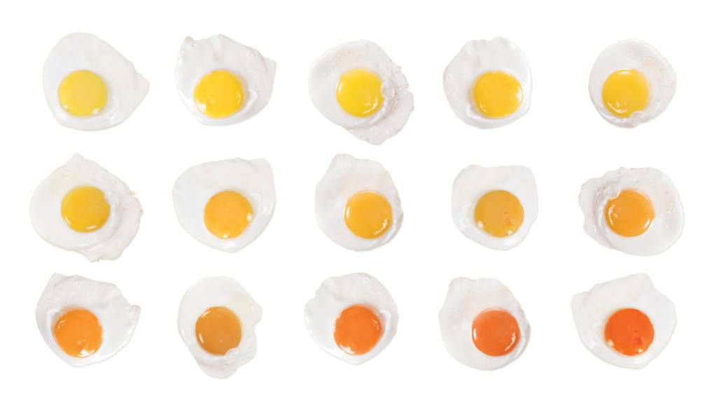Different Yolks For Different Folks Why We Judge An Egg By Its