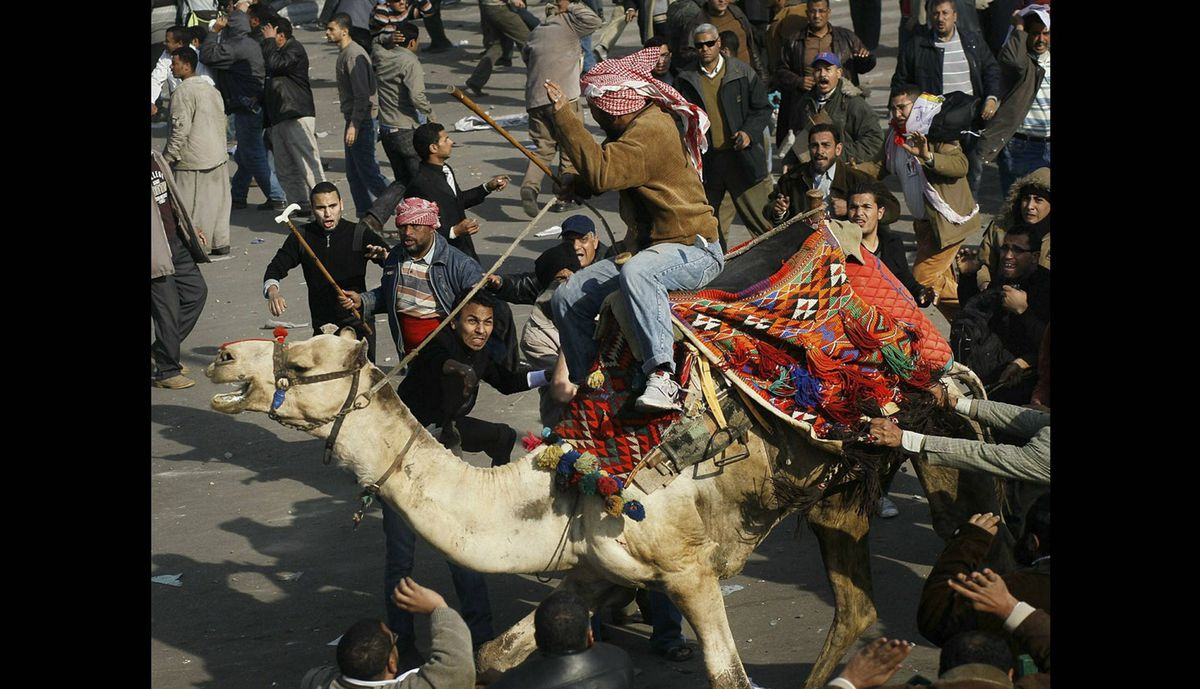 A supporter of embattled Egyptian president Hosni Mubarek rides a camel through the melee during a clash between pro-Mubarek and anti-government protesters in Tahrir Square on Feb. 2, 2011 in Cairo, Egypt.