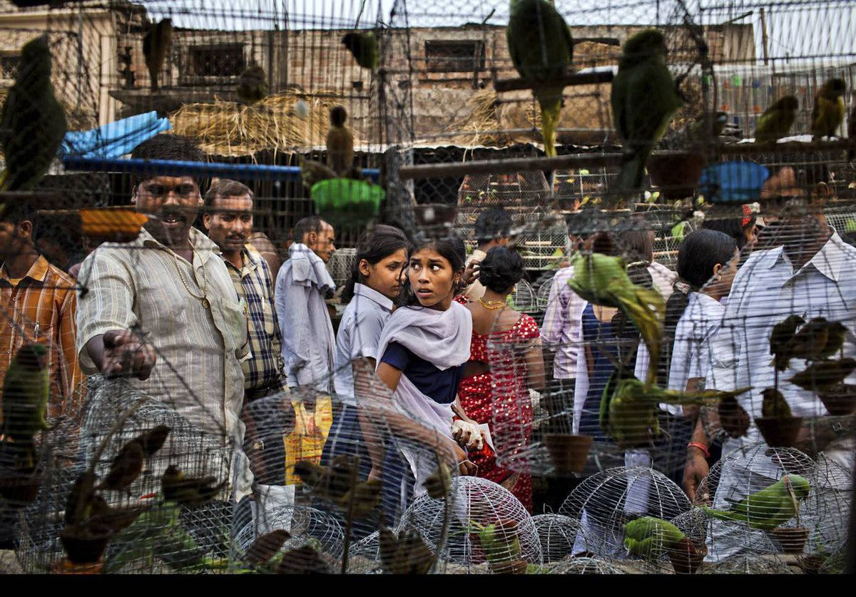 People walk past cages with birds for sale at a market during the Sonepur Mela in Sonepur, India. The mela is one of Asia's largest cattle fairs and lasts for a fortnight.