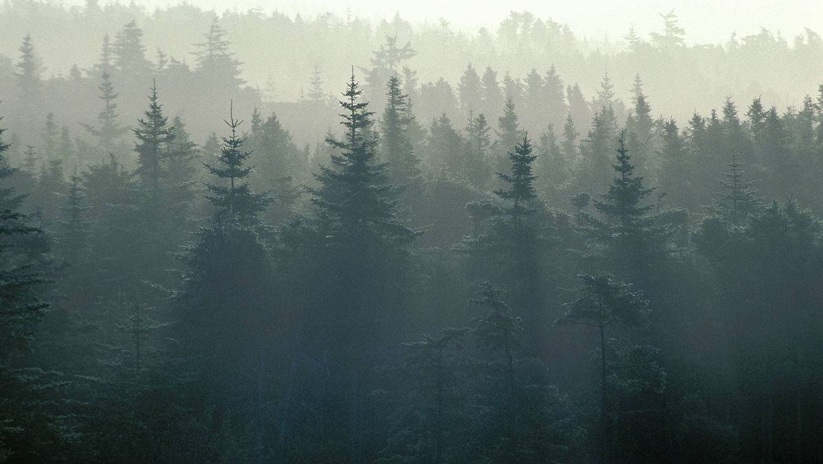 Canada's boreal forest