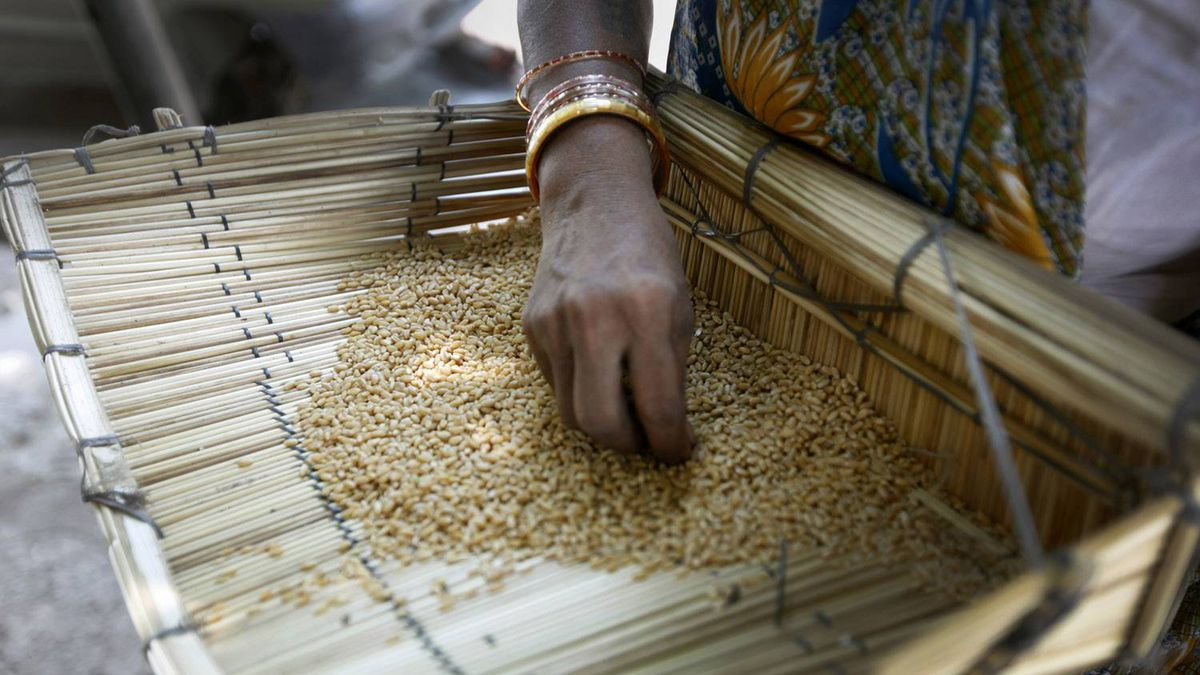 Woman sifts through wheat, picking out grit and dirt outside of a New Delhi shop seeling bulk wheat. Premium grain prices in New Delhi have increased more than 10 per cent in the last year.