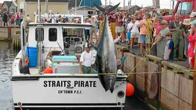 In PEI, 360 people hold commercial licences to fish for bluefin tuna, which makes them eligible for the catch-and-release fishery.