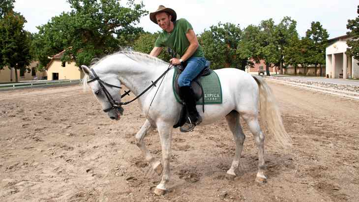 The author learns to ride a Lipizzaner. Unlike Western horses, Lipizzaners interpret every move by the rider as a direction.