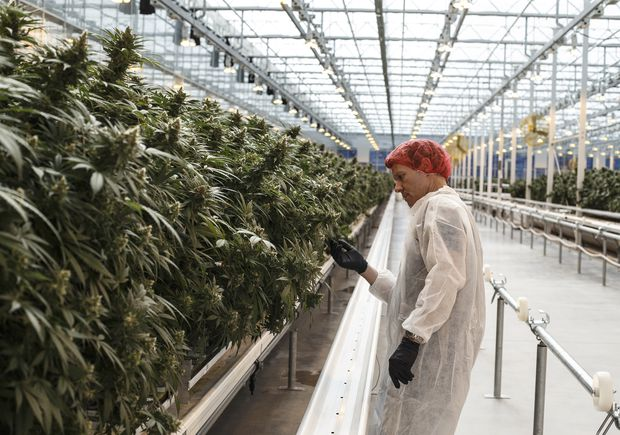 Aurora Cannabis shares fall after chief corporate officer Battley steps down